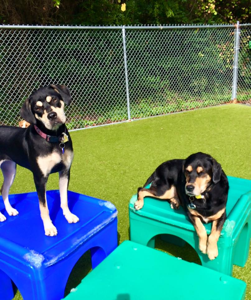 Brookhaven Atlanta Doggy Daycare