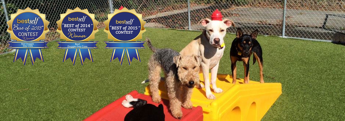 Voted Back to Back Best Dog Daycare In Atlanta – 2013, 2014 & 2015!